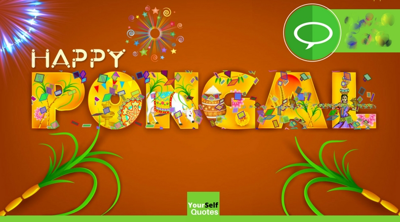 Happy pongal festival wishes messages greetings images happy pongal festival wishes m4hsunfo