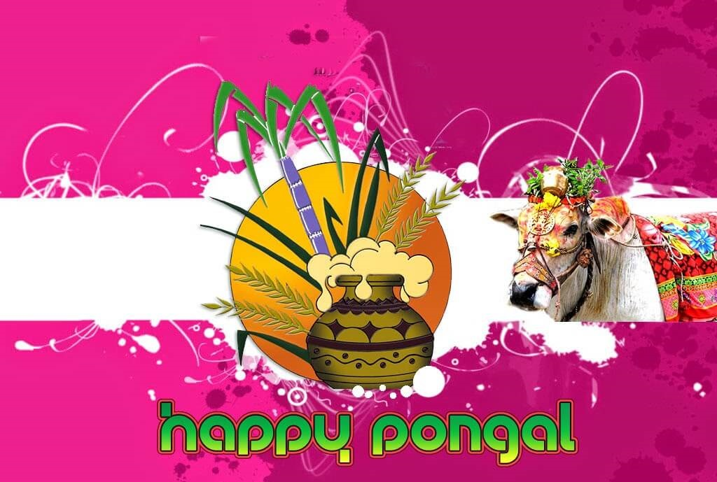 Best Pongal Wishes Images