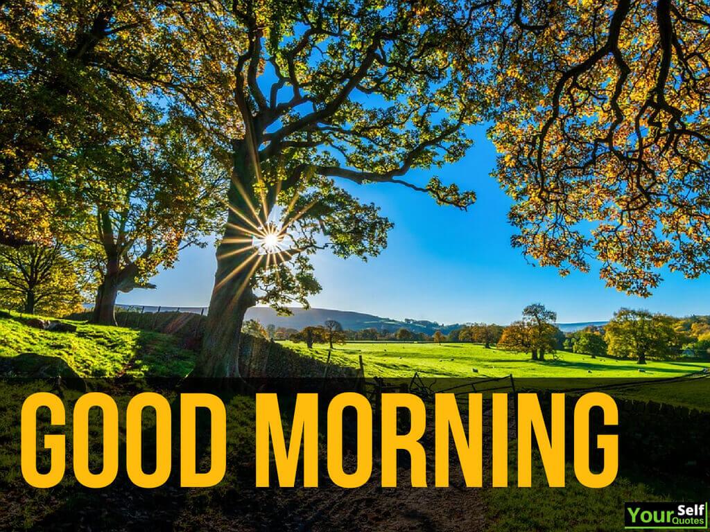Top 110 Hindi Good Morning Quotes Shayari Sms Messages With Images