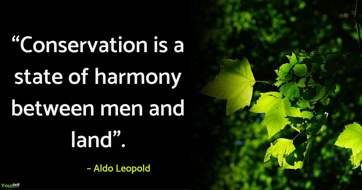Environment Quotes Slogans by Aldo Leopold