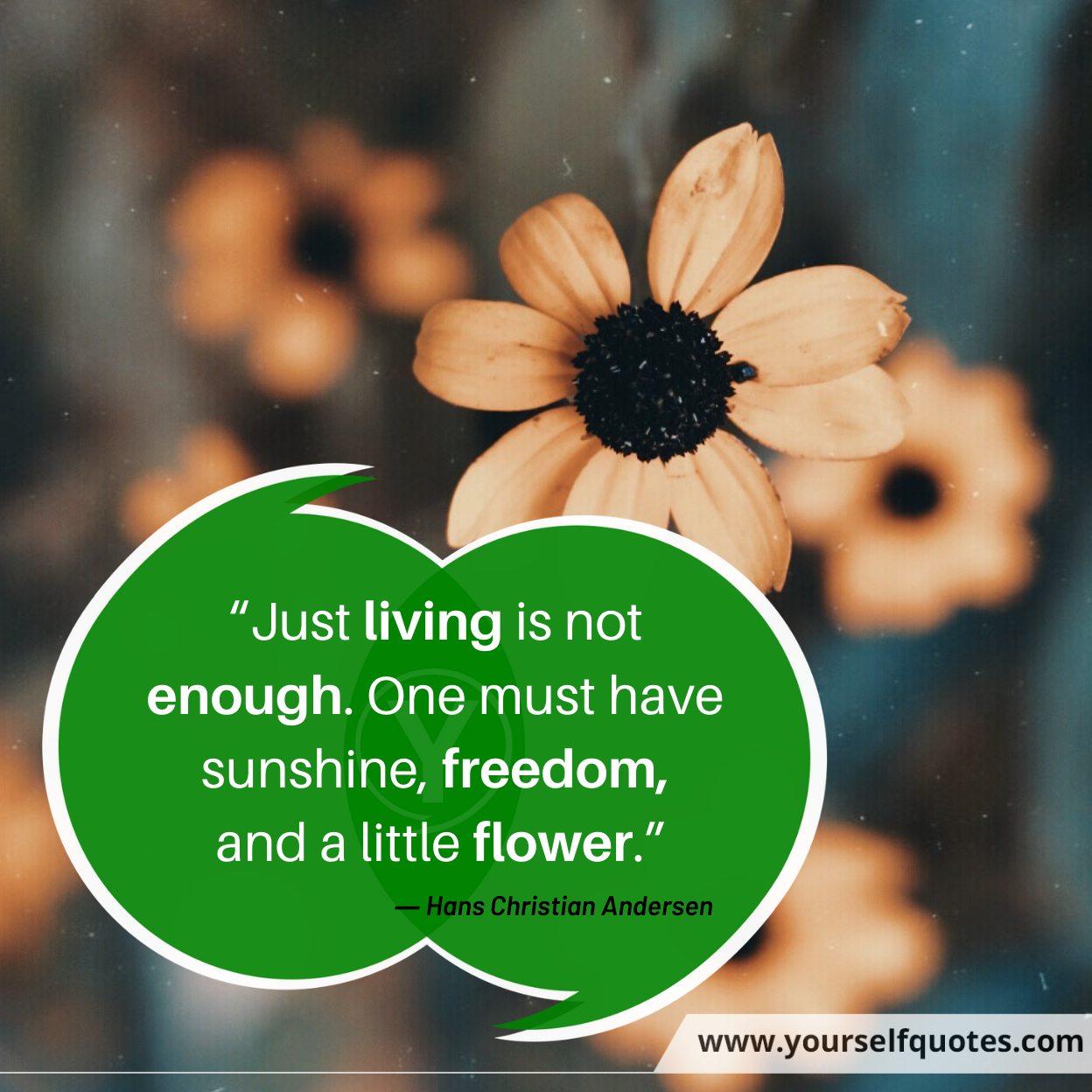 Flower Quotes by Hans Christian Andersen