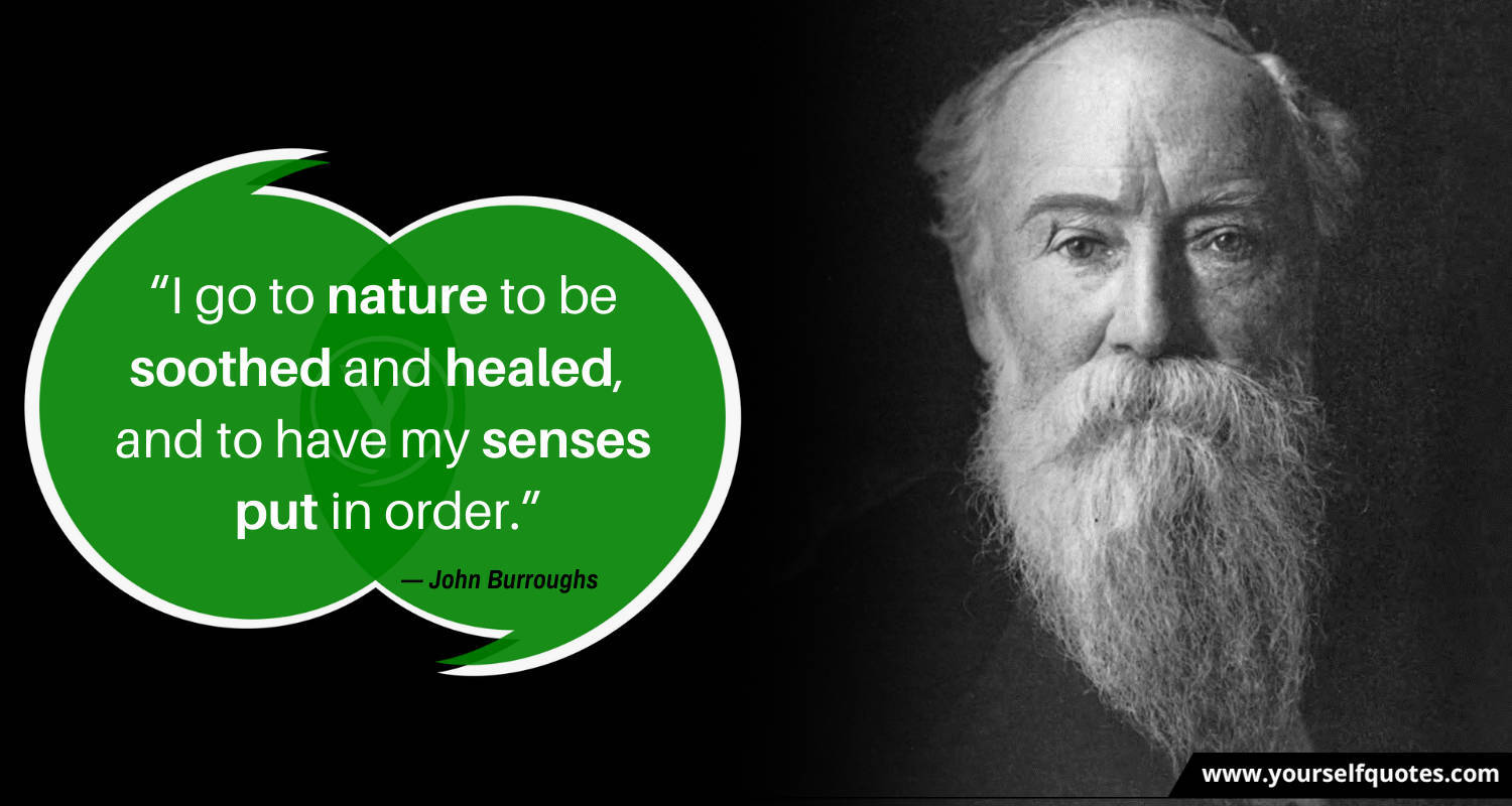 Nature Quote by John Burroughs